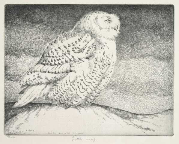 Snowy Owl No. 3. By H. Emerson Tuttle. Drypoint, 1934.