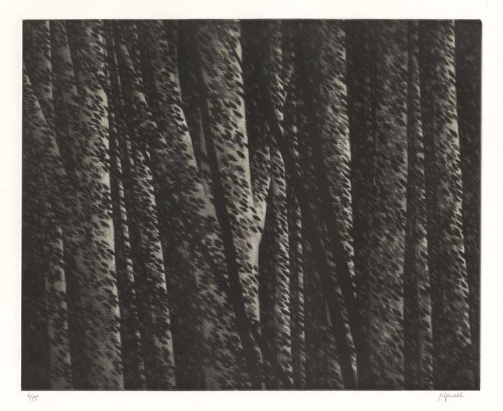 Forest nocturne II. By Robert Kipniss. Mezzotint, 2000.