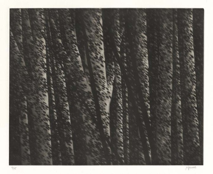 Forest nocturne II. By Robert Kipniss. Mezzotint, 2000.