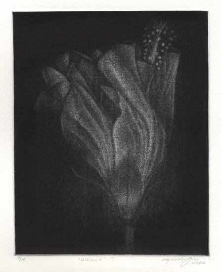 Hibiscus. Cleo Wilkinson. Mezzotint, 2004. Edition 15.