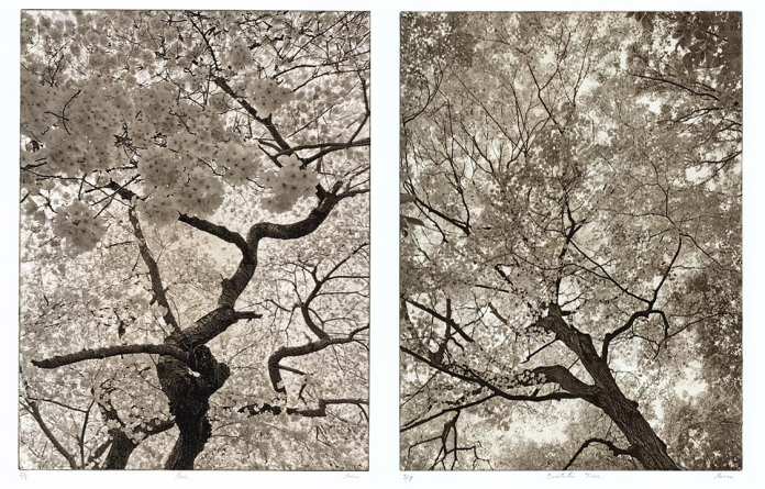 (Left) Lace. By Yvette Lucas. Solar plate etching, 2010. Edition 8.  (Right) Ecstatic Tree. By Yvette Lucas. Solar plate etching, 2010. Edition 8.
