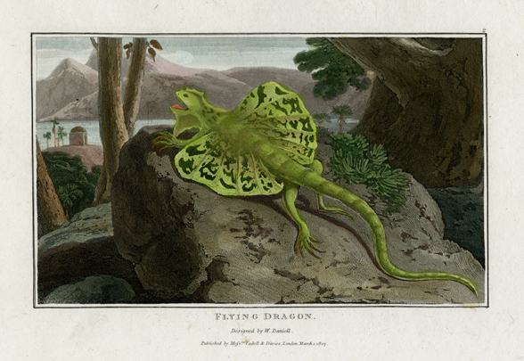 "Flying Dragon. Designed and engraved by William Daniell for his work ""Interesting Selections from Animated Nature."" Published by Cadell & Davies, London. Aquatint engraving, 1807. From the deluxe edition on large paper with the engravings executed on chine colle. LINK."