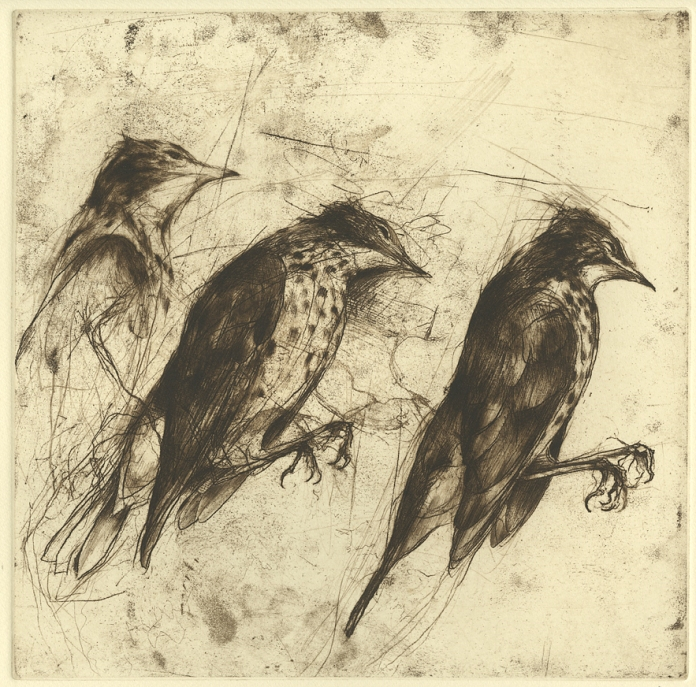 "Thrush. Jake Muirhead. Softground with drypoint, 2014. A/P. Image size 11 7/8 x 11 7/8"". LINK."