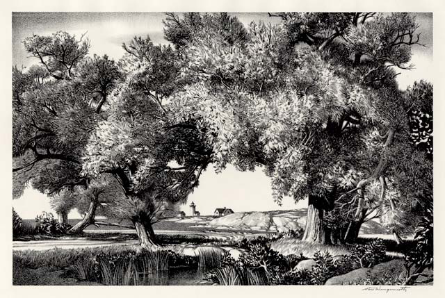 Cape Ann Willows   [Rockport, Massachusetts.] Stow Wengenroth. Lithograph, 1947. Image size 8 3/4 x 13 1/2