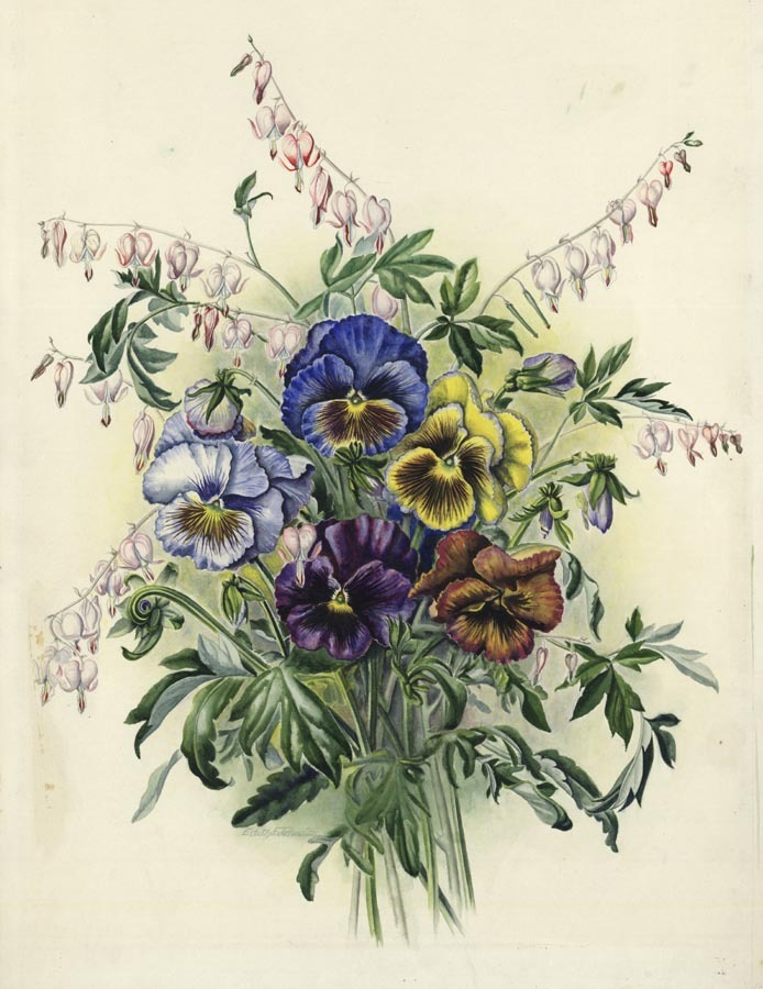 "Pansy & Bleeding Heart. Edith Johnston. Watercolor, undated. Image size 20 7/8 x 15"" (531 x 382 mm). Signed by the artist (under leaves) on left side. LINK."