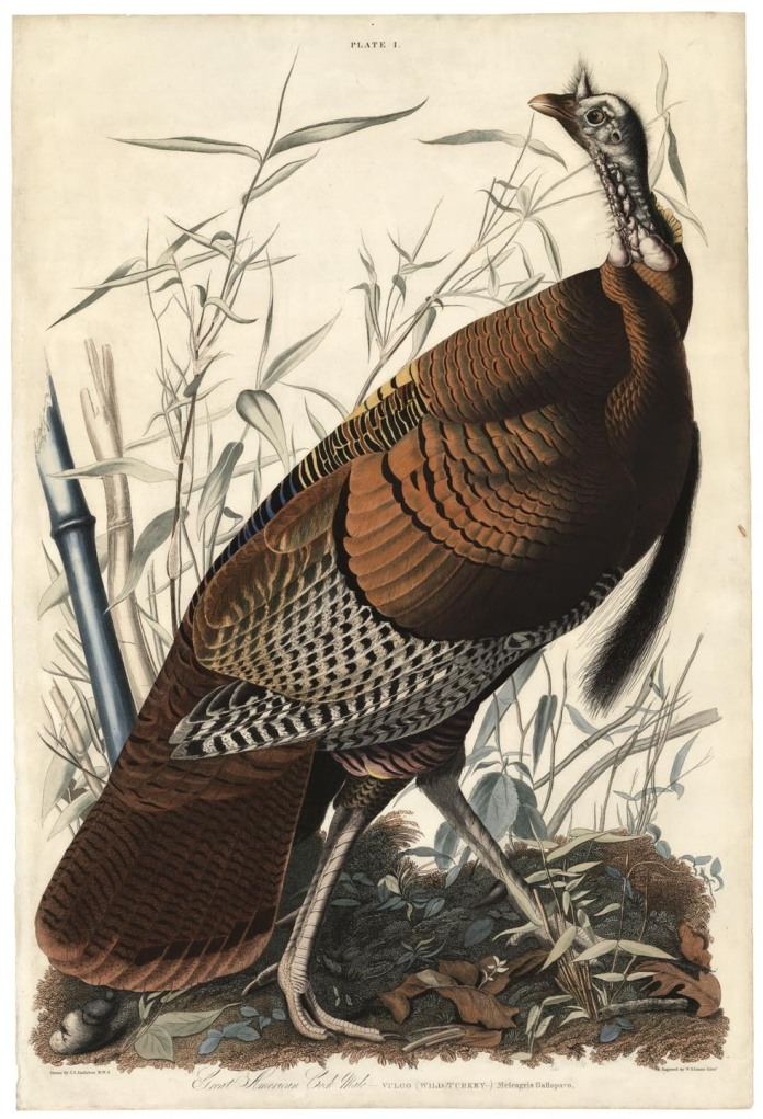 "Great American Cock, Male. (Wild Turkey). Plate 1. John James Audubon. Handcolored engraving, 1827-38. Paper size size 39 x 26"" (990 x 606 mm). From the first printed edition of John James Audubon's ""Birds of America."" Engraved, printed, and colored by W. H. Lizars, Edinburgh. A true first printing by Lizars. This particular plate is often found with severe damages, as it was the first plate in the first volume, but this impression is unusually fine."