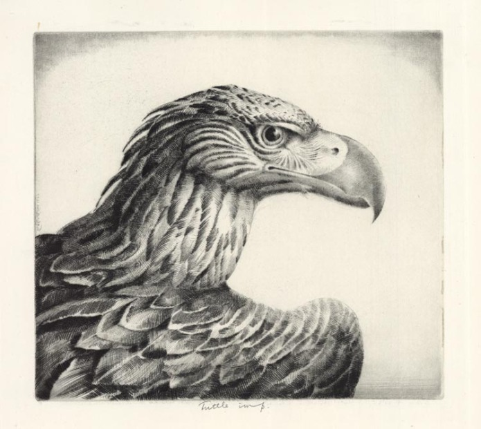 Aquiline Eagle (Eagle Head). H. Emerson Tuttle. Drypoint, 1937. Ed. 45. LINK.